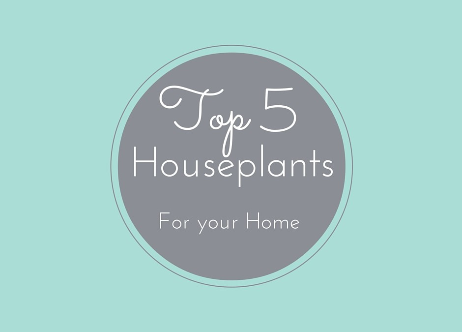 5 Houseplants That Are A MUST for Your Home